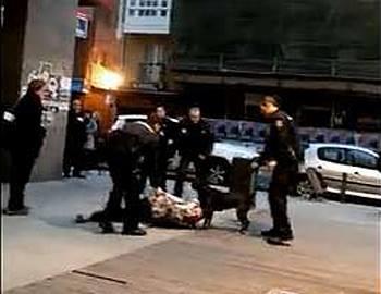 Фото. Шесть полицейских и собака
