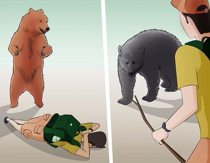 Фото. Отбивайтесь палкой от медведя