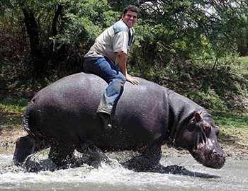 Фото. Мужчина приручил бегемота