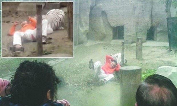 Фото. В зоопарке тигр напала на человека