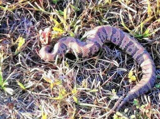 Фото. Змея после укуса человека