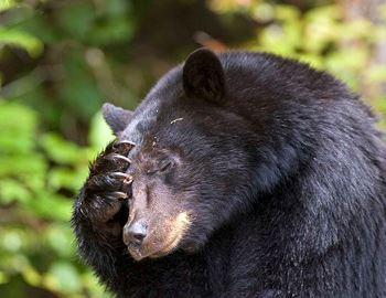 Фото. Этот черный медведь не нападал