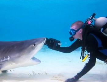 Фото. Аквалангист гладит акулу