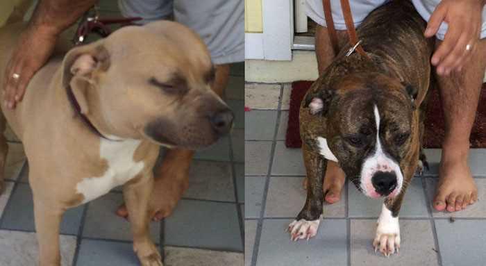 Фото. Собаки серьезно покусавшие мжчину