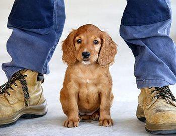 Собачка между ног мужчины