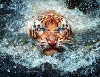 Тигр стащил человека с лодки