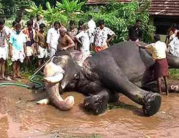 Фото. Замбийский слон был убит