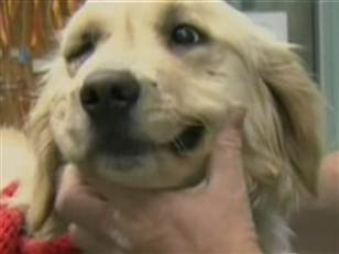Собака отбившая мальчика у пумы