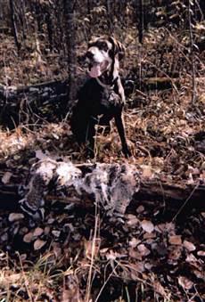 Отважная собака нашедшая мужчину в лесу