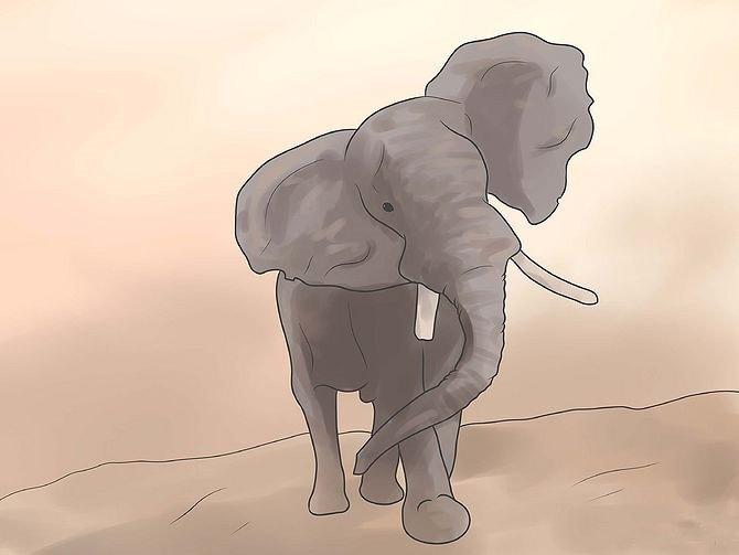Как узнать что слон злится