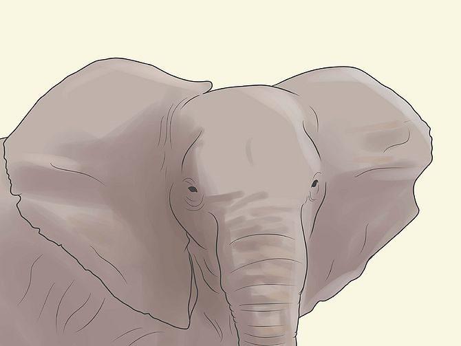 Слон размахивает своими ушами