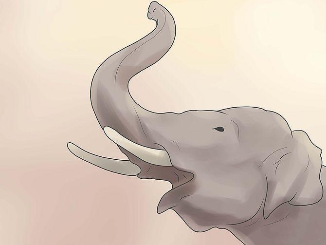 Как слон трубит