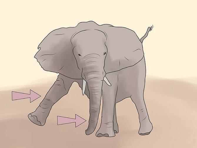 Шагает как пьяный слон