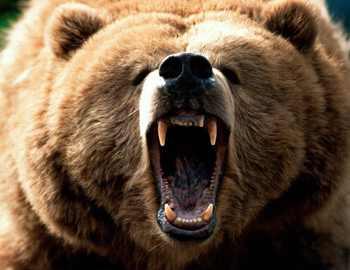 медведь напал на грибников