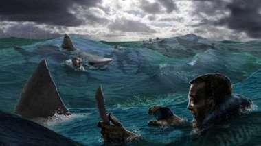 акулы напали на экипаж корабля