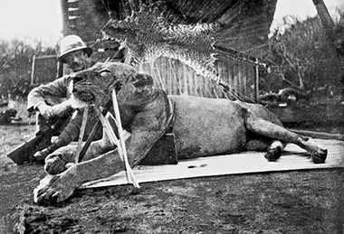 львы убитые Паттерсеном