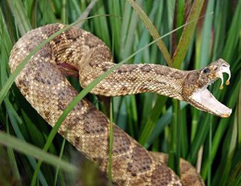 избежать нападения змеи