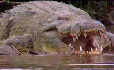 известный крокодил-людоед