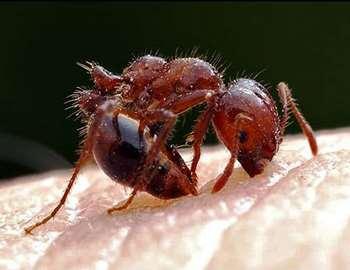 средство от укусов муравья