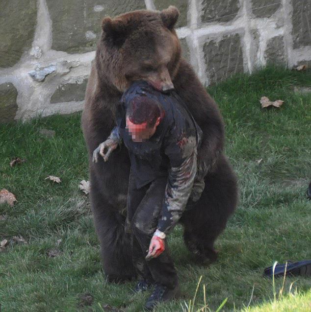 напавший на человека медведь из зоопарка