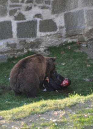 мощные челюсти медведя