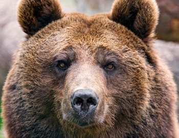 мужчина отбился от медведя