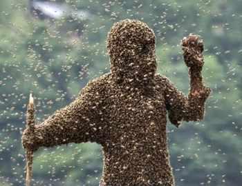 медоносные пчелы атакуют