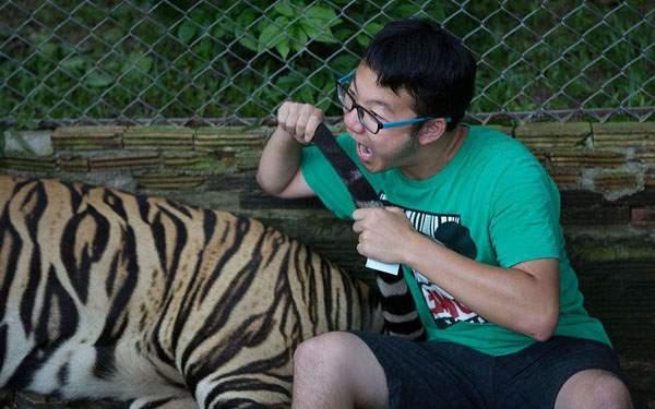 в парке для тигров