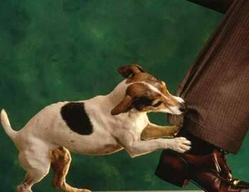 стая бродячих собак