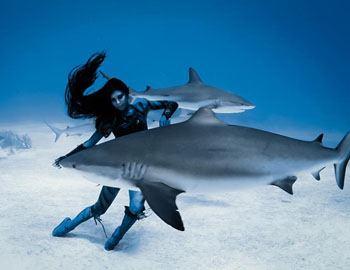 не боимся акул