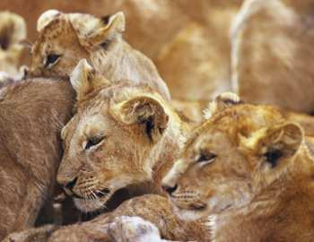 крепкие семьи среди животных