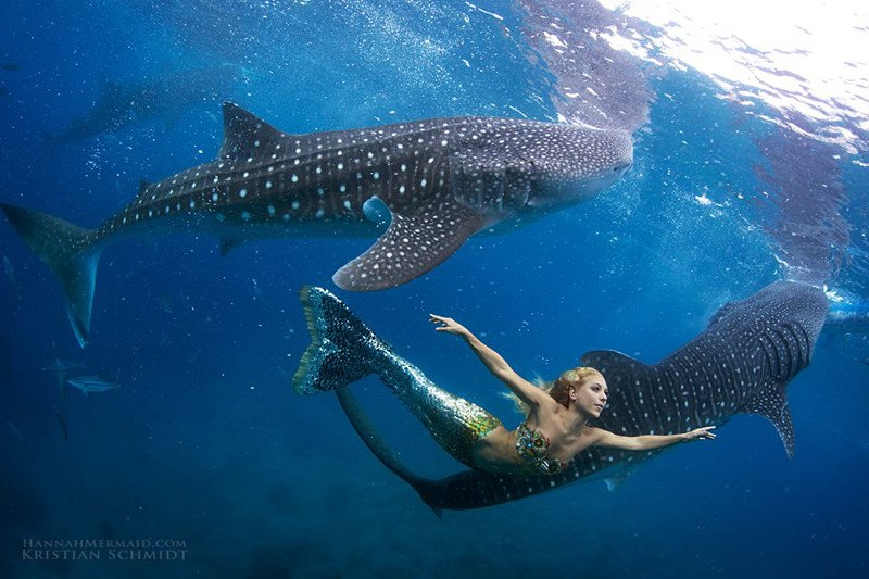 русалка рядом с акулой