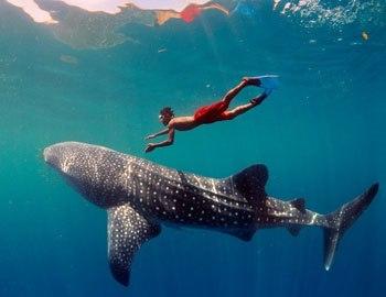 дайверы среди акул