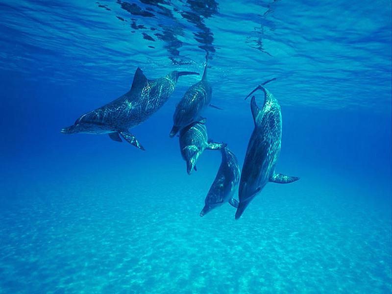 дельфины спасают других животных