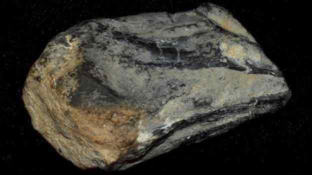 остатки клюва древнего кальмара