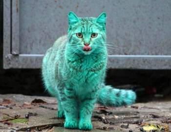 зеленый кот на улицах города