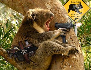 злобная коала