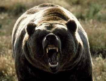 медведь гонится за парнем
