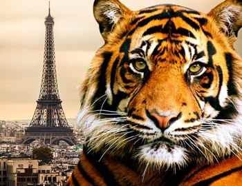 тигр на фоне Парижа