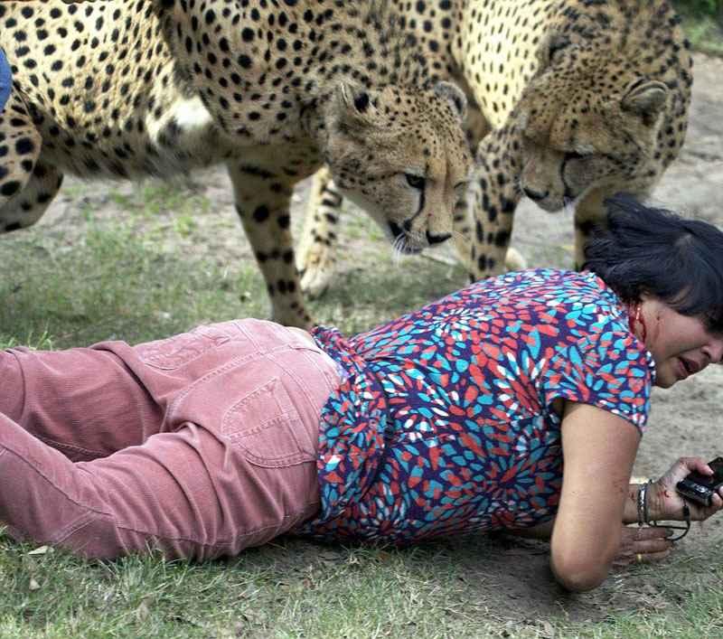 гепарды напали на упавшую женщину