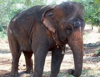 религиозный слон