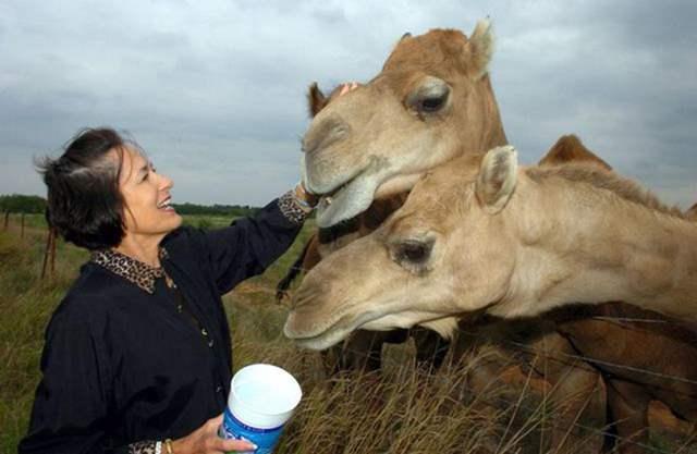 довольная женщина возле верблюдов