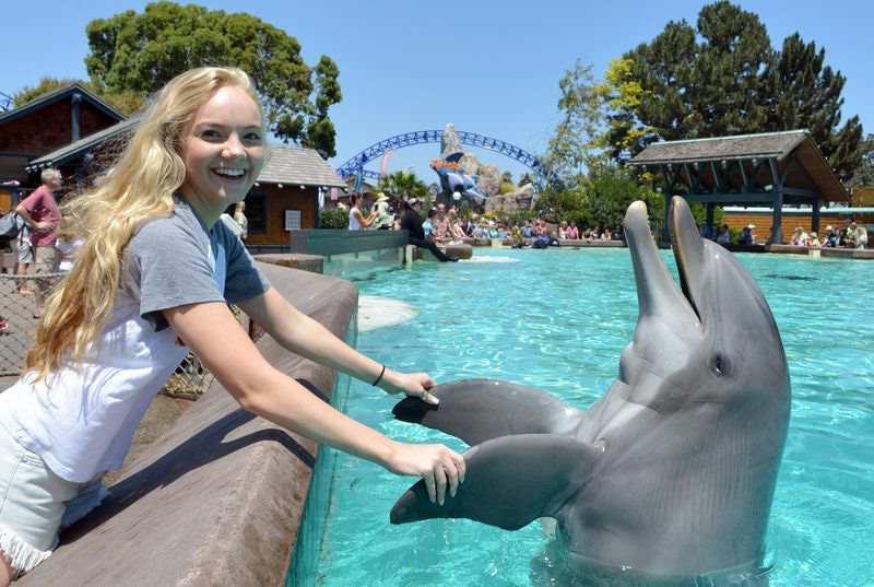 дельфин радует девушку