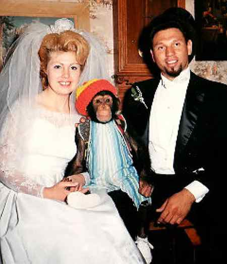 шимпанзе Мой на свадьбе у Джеймса Дэвиса
