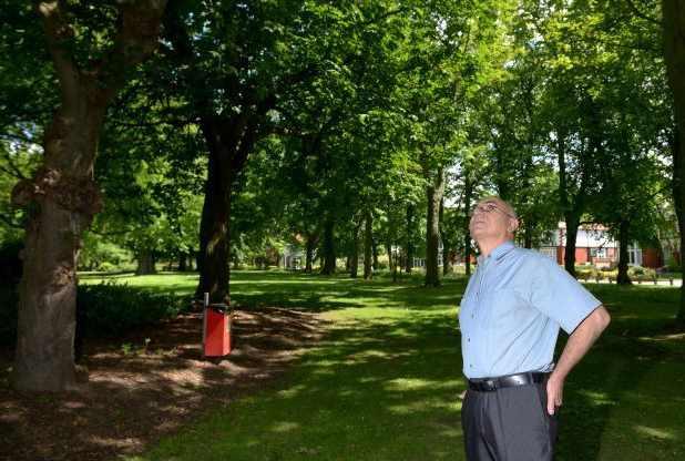 человек смотрит вверх деревьев