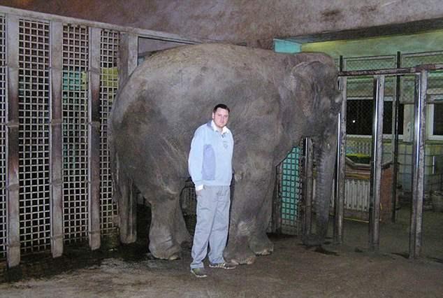 слон в вальере