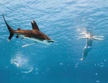 акула хочет напасть на пловца