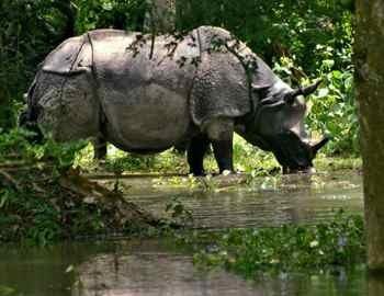 носорог в лесу