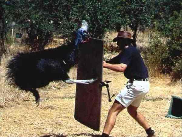казуар прыгает на мужчину