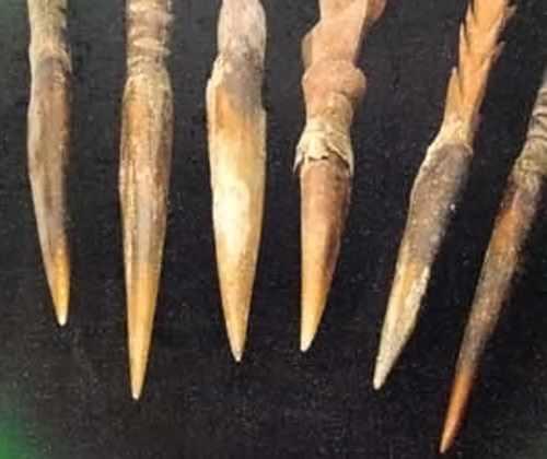 острые когти казуара